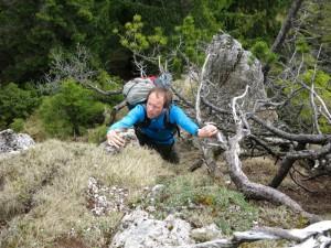 Latschen-IIer kurz unter dem Brunnberg-Gipfel