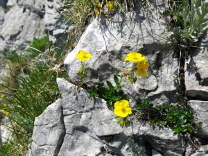 Auch zwischen den Felsen blüht es