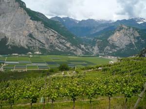 Rückblick über Weinberge ins Sarcatal