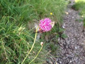 Diese Blüte hat gleich zwei Besucher