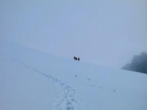 Die zweite Seilschaft auf dem Weg zum Breitlauihorn