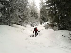 Hinauf durch den Winterwald