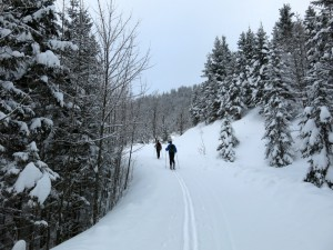 Aufstieg über den flachen Forstweg