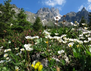 Die Große Bischofsmütze thront über der Blumenpracht