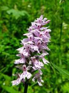 Wunderschöne Orchidee