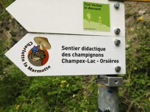Mt Charlotte dem Murmeltier kann man hier etwas über Pilze lernen.
