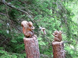 Eichhörnchen lieben offenbar Pilze.