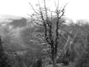 Wächter über dem Tal
