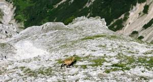 Wir waren nicht allein am Berg.