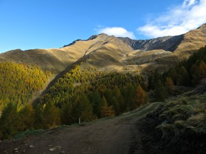 Herbstlich gefärbte Hänge gegenüber der Mairalm