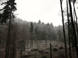 Beim Start zeigen die Bäume schon erstes Weiß.