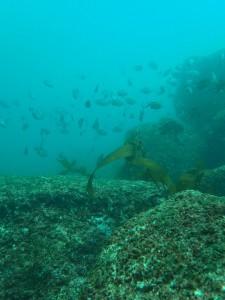 Immer wieder faszinierend die Unterwasserwelt