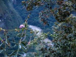 Im Anstieg bereits hoch über dem Río Urubamba