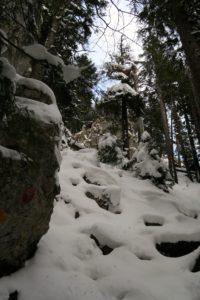 Steil geht es durch den winterlichen Wald zum Gipfel.