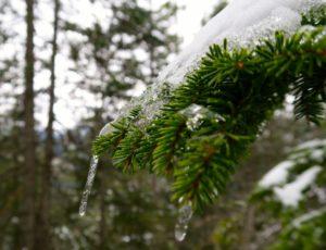Der Wald zeigt sich heute winterlich.