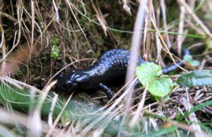 Dieser kleine Kollege schien sich im feuchten Gras pudelwohl zu fühlen.