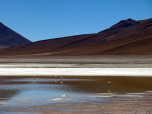 Der bolivianische Altiplano: Wüste, Lagunen, Flamingos
