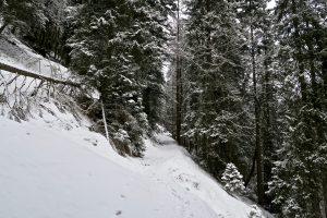 Der Wald wirkte winterlich.