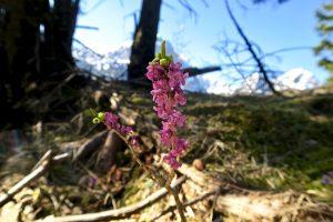 Im Wald zeigt sich ein Frühlingsbote