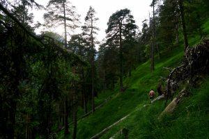 Der lichte Wald ist sehr schön - findet auch die lokale Zeckenpopulation.