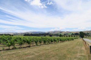 Weinanbau nördlich von Christchurch