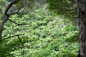 Besonders exotisch wirken die Baumfarne.