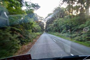 Der Regenwald wirkt undurchdringlich.
