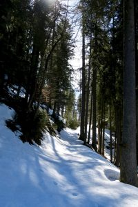 Fröhliches Waldstapfen