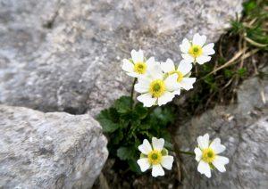 Noch eine weiße Blume, dieses Mal weiter oben