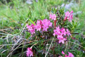 Neben possierlichen Tierchen gibt es im Aufstieg auch ein paar Blumen zu sehen.