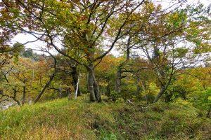 Herbstliche Baumpracht