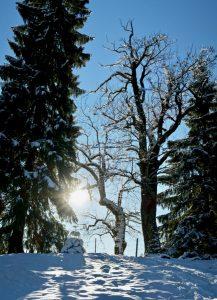 Die Sonne lacht über der Winterlandschaft.