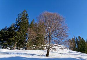 Wintereindrücke im Aufstieg