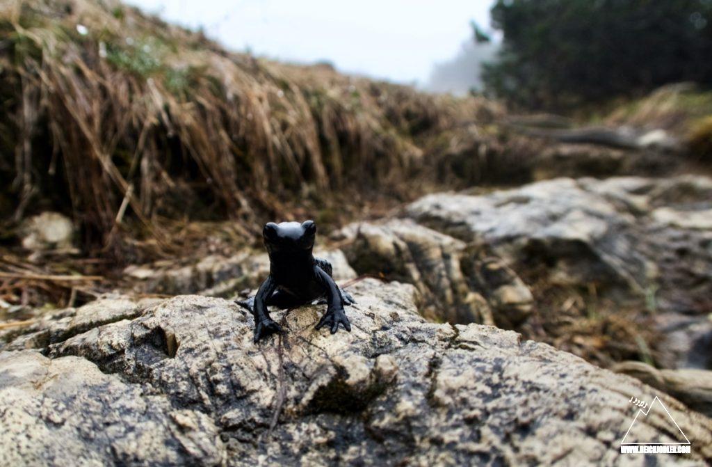 Alpensalamander