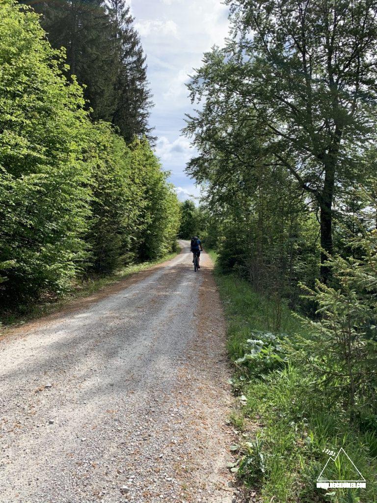 Forststraße zum Hirschbichel