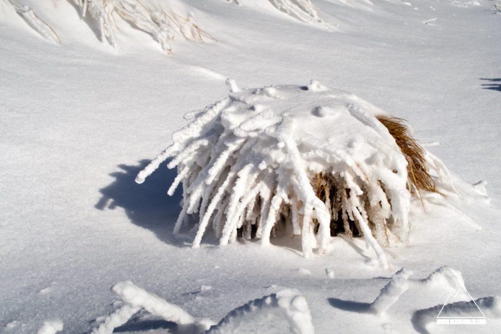 Schneegras am Hochiss