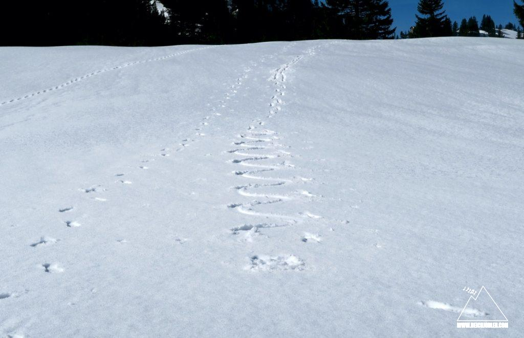 Pseudo-Skispuren