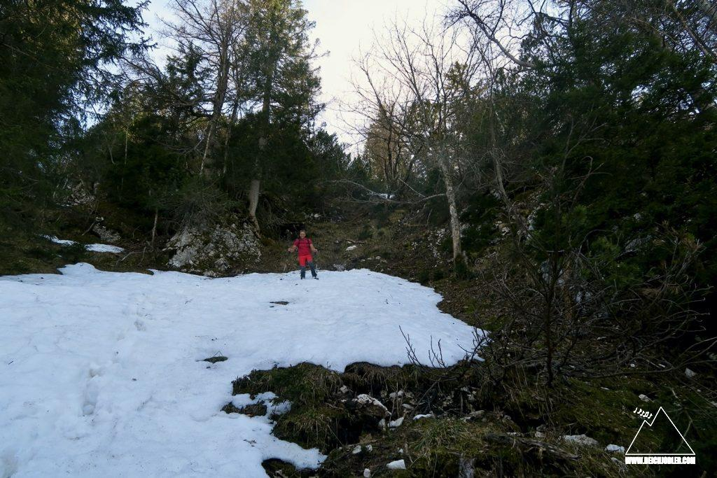 Waldwühlen